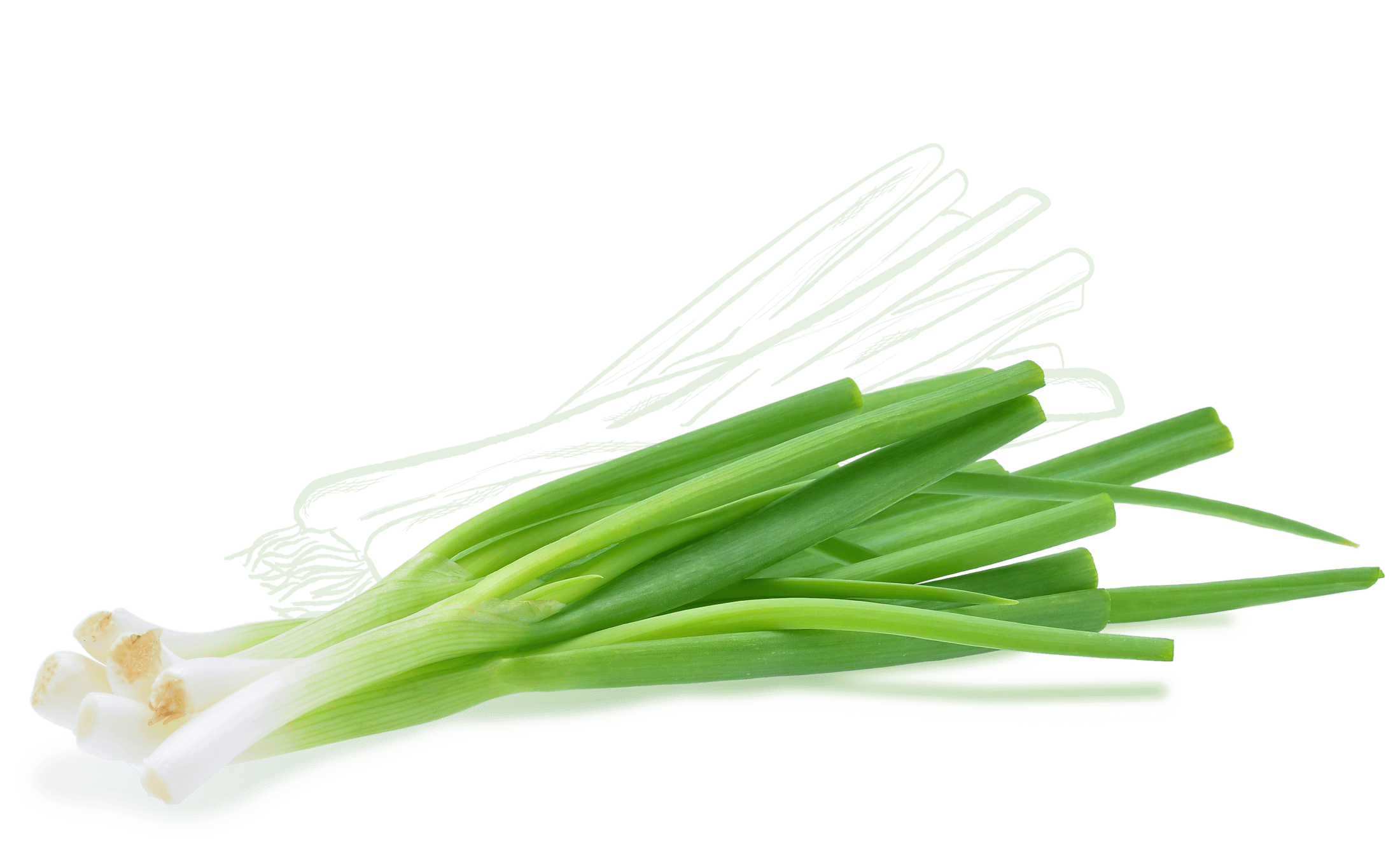 Ingredient Icon Scallion