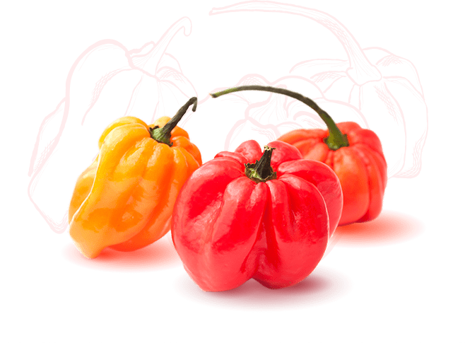 Ingredient Icon Scotch Bonnet Peppers